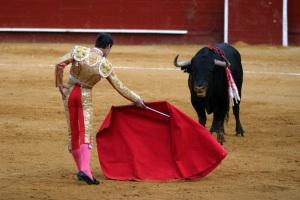 rear ends bullfight